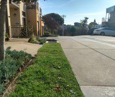 Bioswale strip for driveway (1)