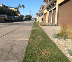 Bioswale strip for driveway (2)